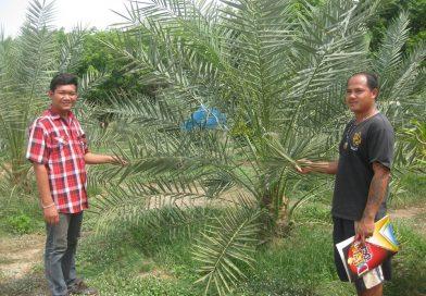 ดำเนินการตรวจรับรอง มาตรฐานสินค้าเกษตร เกษตรอินทรีย์ และ การปฏิบัติทางการเกษตรที่ดีสำหรับพืชอาหาร (GAP)