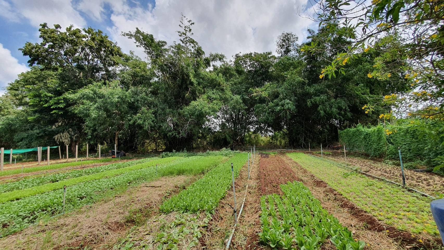 ตรวจรับรองแหล่งผลิตพืชอินทรีย์ ให้กับเกษตรในพื้นที่
