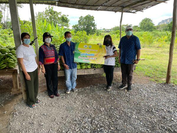 ตรวจรับรองแหล่งผลิต GAP พืช แปลงกล้วยหอม