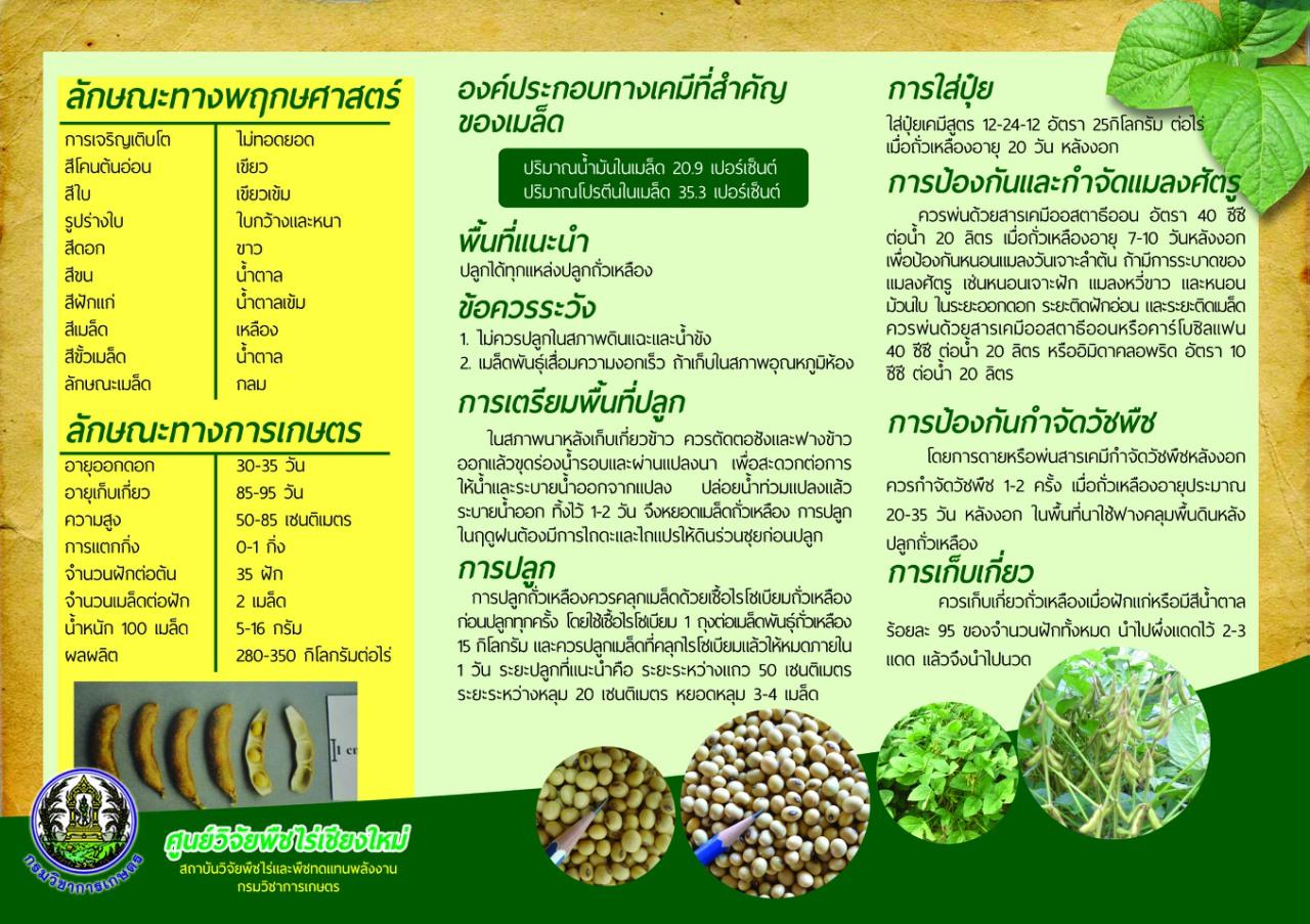 ถั่วเหลืองชม.60 (หลัง)