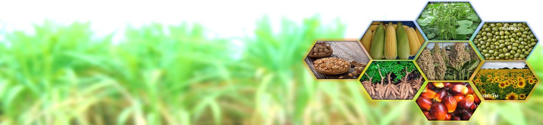 สถาบันวิจัยพืชไร่และพืชทดแทนพลังงาน