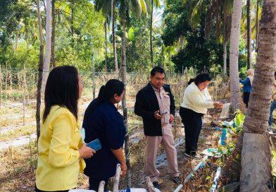สวพ.8 ตรวจเยี่ยมและติดตามสถานการณ์การระบาดของหนอนกินใบมะพร้าวเข้าทำลายกัดกินใบมะพร้าวของเกษตรกร