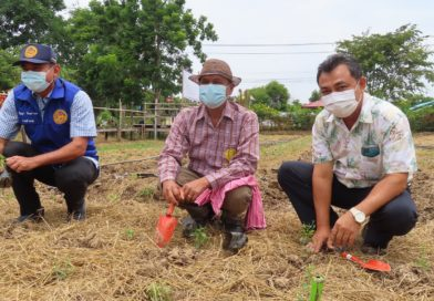 สวพ. 8 กรมวิชาการเกษตร เดินหน้า ฟ้าทะลายโจร 1 ล้านแคปซูล